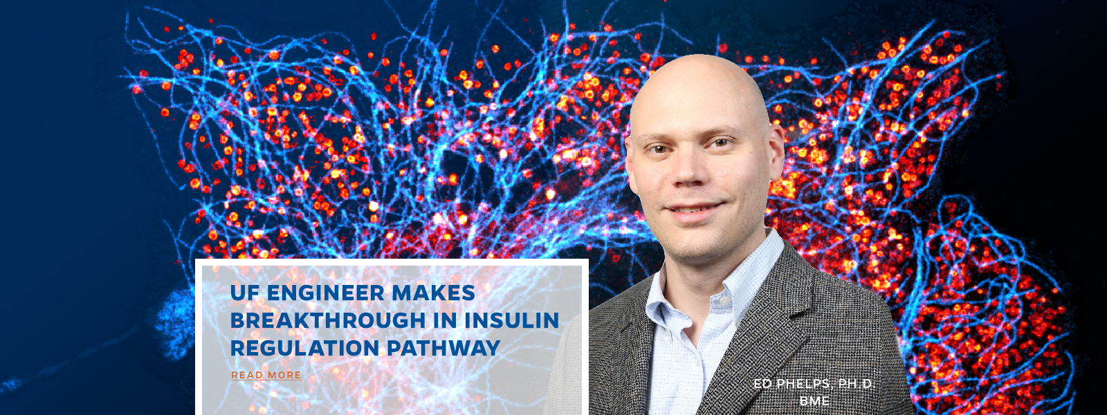 UF Engineer makes  Breakthrough in insulin regulation pathway